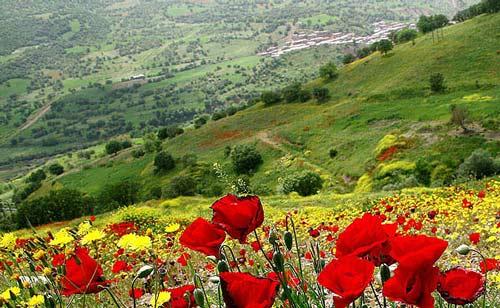 % تصاویر زیبا از طبیعت استان کردستان در فصل بهار